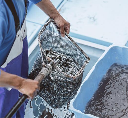 漁師さんがお魚を獲ります